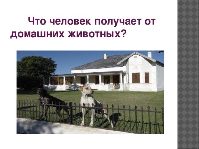 Что человек получает от домашних животных?