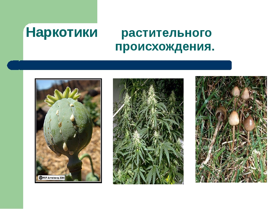 Наркотики растительного происхождения.