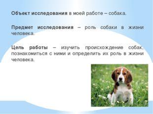Объект исследования в моей работе – собака. Предмет исследования – роль собак