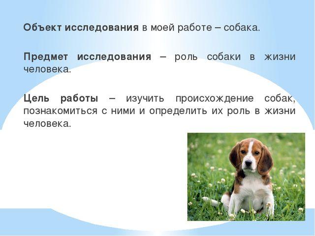 Объект исследования в моей работе – собака. Предмет исследования – роль собак...