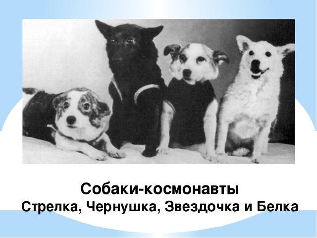 Собаки-космонавты Стрелка, Чернушка, Звездочка и Белка