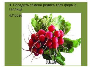 3. Посадить семена редиса трех форм в теплице. 4.Провести наблюдения , сдела
