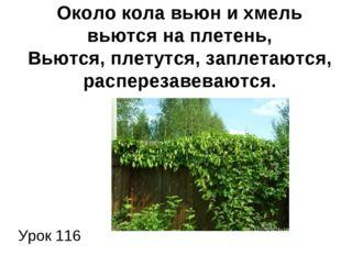 Урок 116 Около кола вьюн и хмель вьются на плетень, Вьются, плетутся, заплет