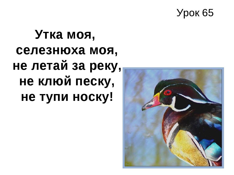 Урок 65 Утка моя, селезнюха моя, не летай за реку, не клюй песку, не тупи нос...