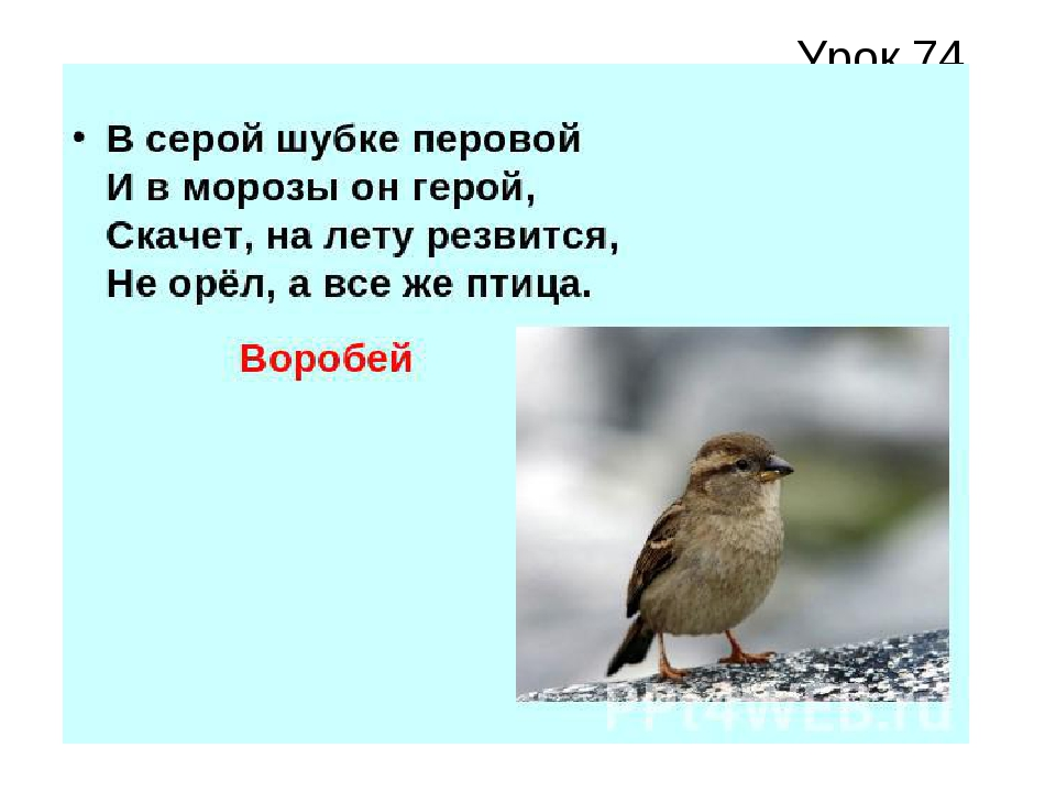 Урок 74