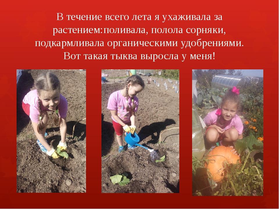 В течение всего лета я ухаживала за растением:поливала, полола сорняки, подка...