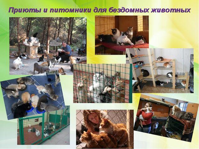 Приюты и питомники для бездомных животных