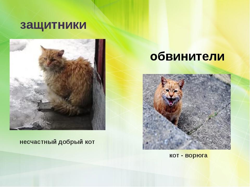 кот - ворюга несчастный добрый кот защитники обвинители