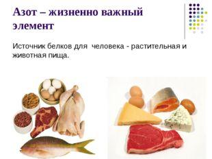 Азот – жизненно важный элемент Источник белков для человека - растительная и