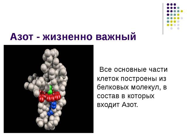 Азот - жизненно важный элемент Все основные части клеток построены из белковы...