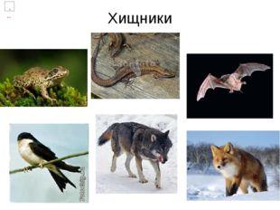 Хищники