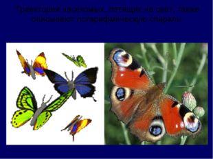 Траектории насекомых, летящих на свет, также описывают логарифмическую спираль.