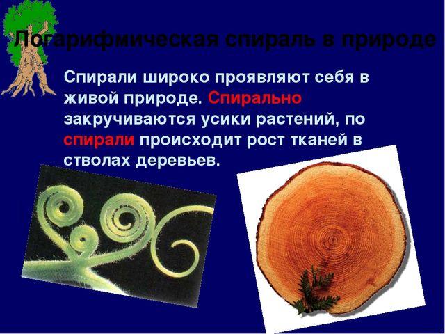Спирали широко проявляют себя в живой природе. Спирально закручиваются усики...