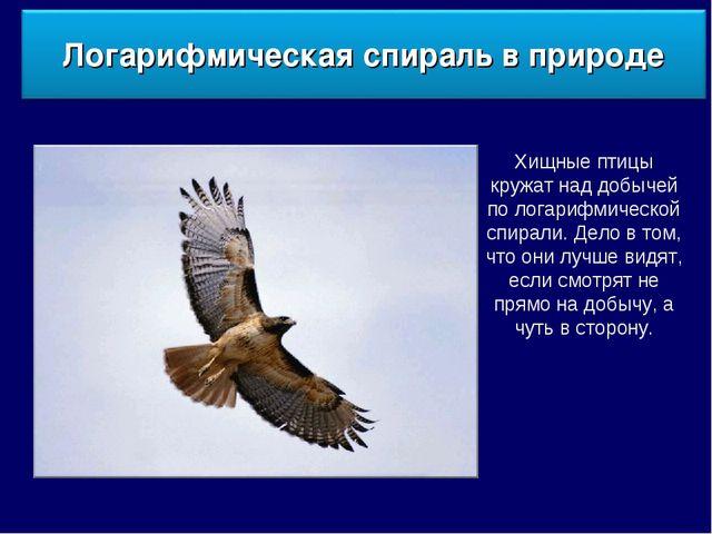 Хищные птицы кружат над добычей по логарифмической спирали. Дело в том, что о...