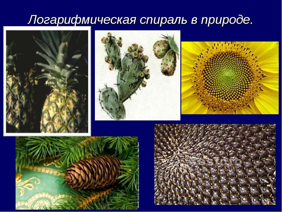 Логарифмическая спираль в природе.
