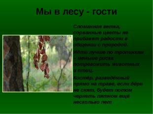 Мы в лесу - гости Сломанная ветка, сорванные цветы не прибавят радости в обще