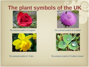 The plant symbols of the UK 	 	Y The national symbol of England The national