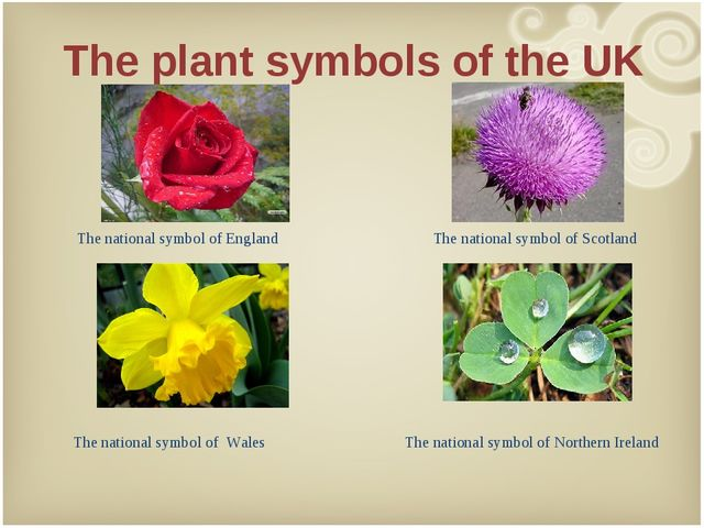 The plant symbols of the UK 	 	Y The national symbol of England The national...