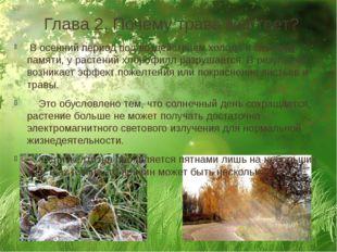 Глава 2. Почему трава желтеет? В осенний период под воздействием холода и сез