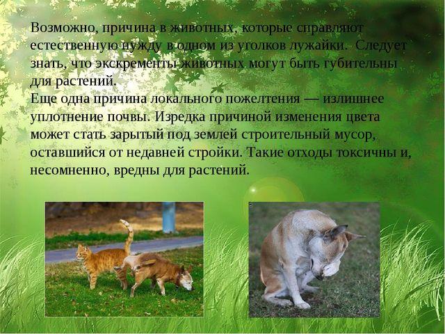 Возможно, причина в животных, которые справляют естественную нужду в одном из...