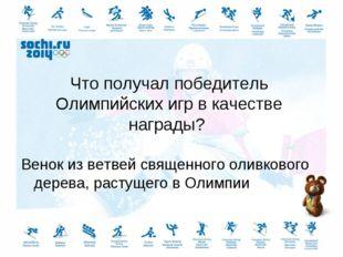 Что получал победитель Олимпийских игр в качестве награды? Венок из ветвей св