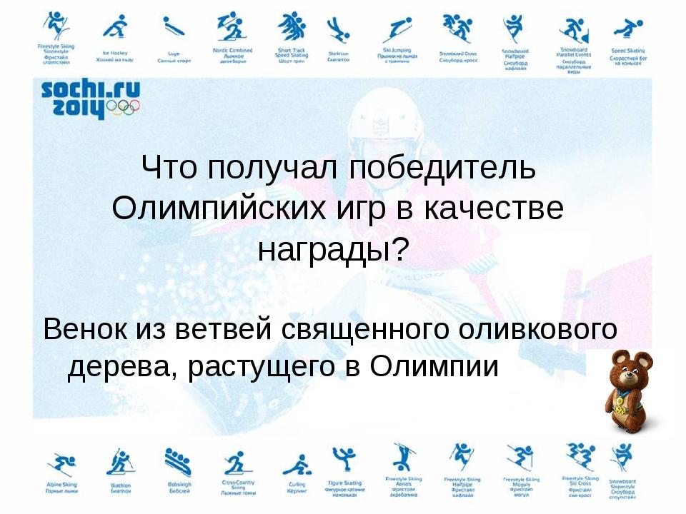 Что получал победитель Олимпийских игр в качестве награды? Венок из ветвей св...