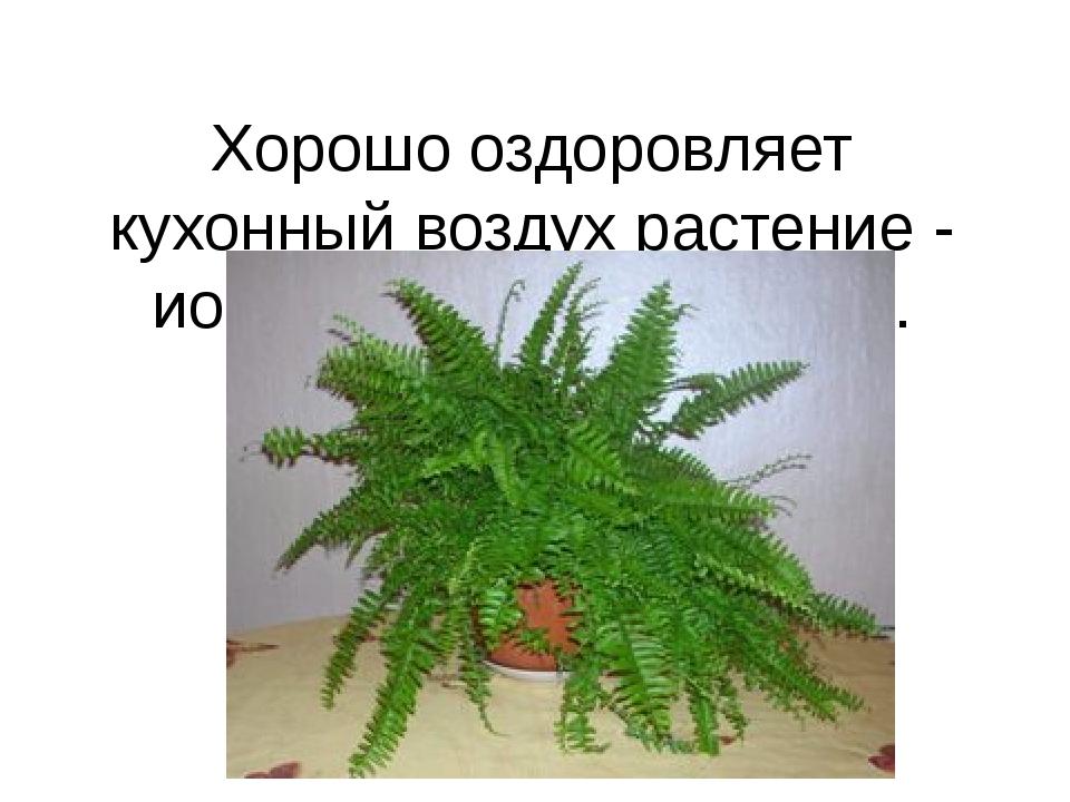 Хорошо оздоровляет кухонный воздух растение - ионизатор —папоротник.