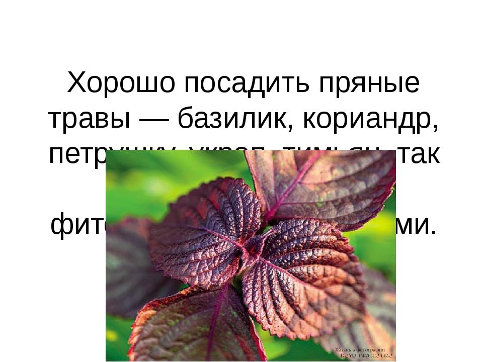 Хорошо посадить пряные травы — базилик, кориандр, петрушку, укроп, тимьян, та...