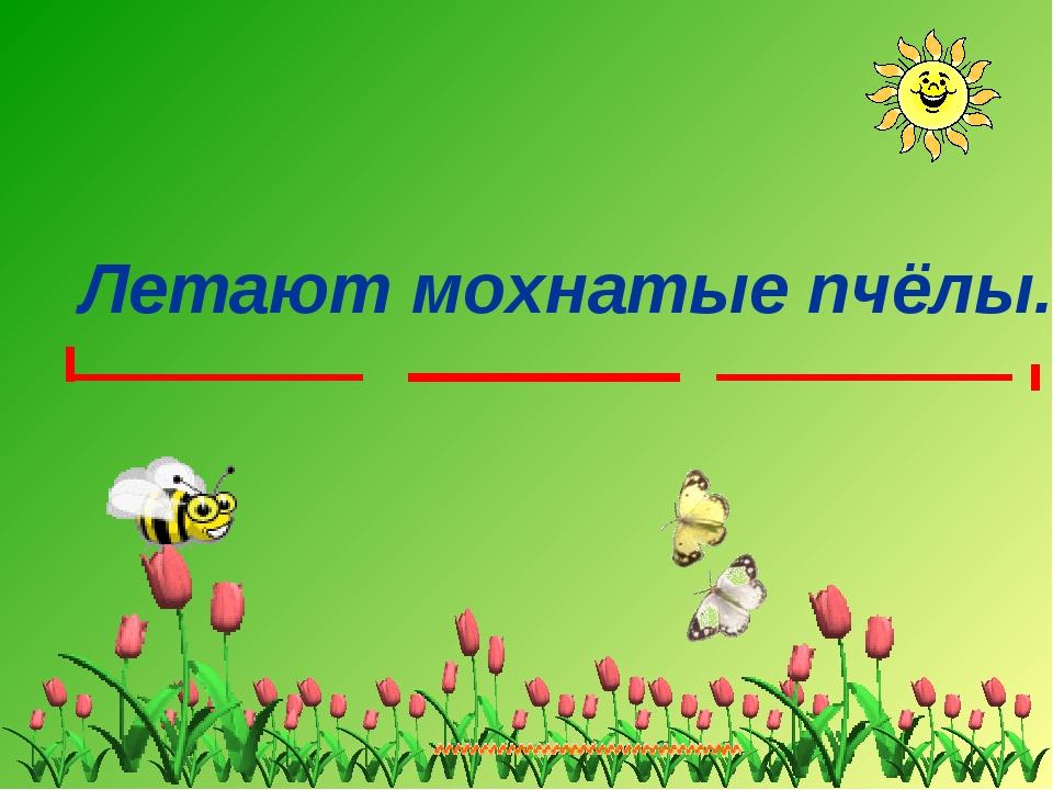 Летают мохнатые пчёлы.