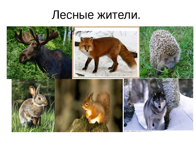 Лесные жители.