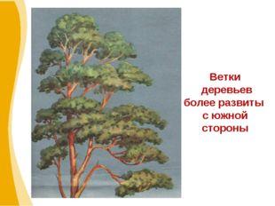 Ветки деревьев более развиты с южной стороны