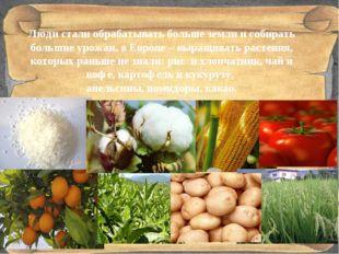 Люди стали обрабатывать больше земли и собирать большие урожаи, в Европе – в