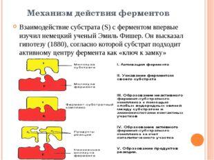 Механизм действия ферментов Взаимодействие субстрата (S) c ферментом впервые