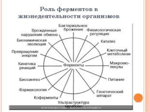 Роль ферментов в жизнедеятельности организмов
