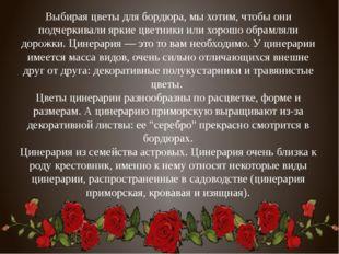 Выбирая цветы для бордюра, мы хотим, чтобы они подчеркивали яркие цветники ил