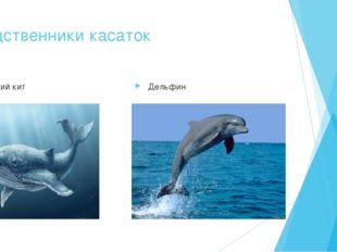 Родственники касаток Синий кит Дельфин