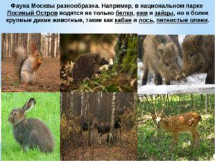 Фауна Москвы разнообразна. Например, в национальном паркеЛосиный Островводя