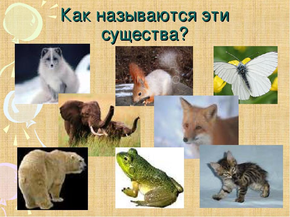 Как называются эти существа?