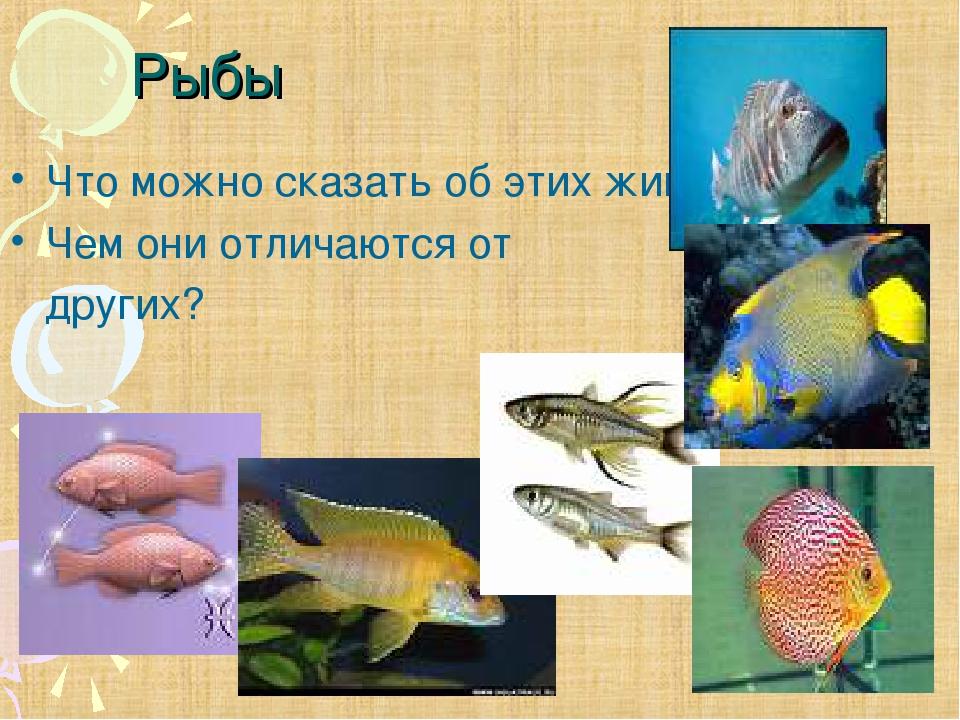 Рыбы Что можно сказать об этих животных? Чем они отличаются от других?
