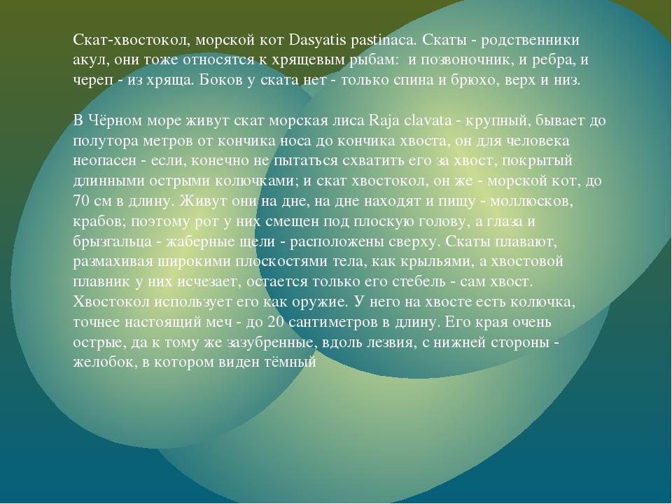 Скат-хвостокол, морской кот Dasyatis pastinaca. Скаты - родственники акул, он...