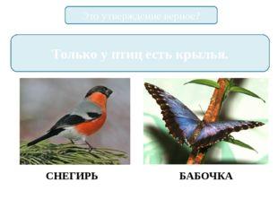 Это утверждение верное? Только у птиц есть крылья. СНЕГИРЬ БАБОЧКА