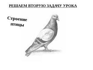 ←ГОЛОВА ШЕЯ→ ←КЛЮВ ←ТУЛОВИЩЕ ХВОСТ→ ←НОГИ Строение птицы ГОЛУБЬ РЕШАЕМ ВТОРУЮ