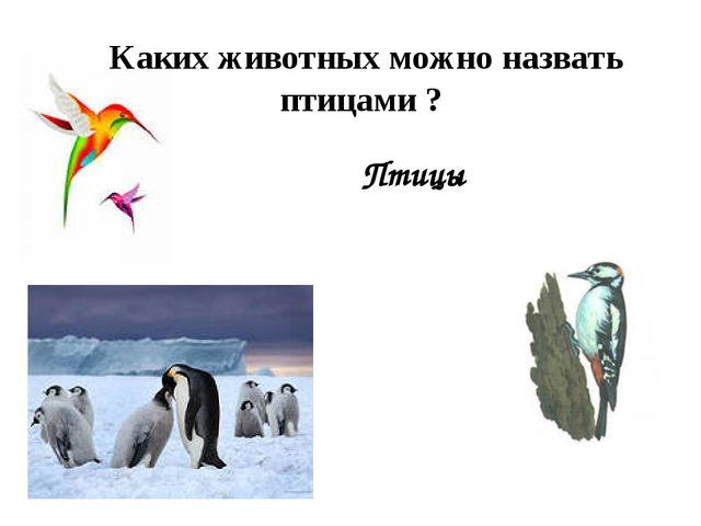 Птицы Каких животных можно назвать птицами ?
