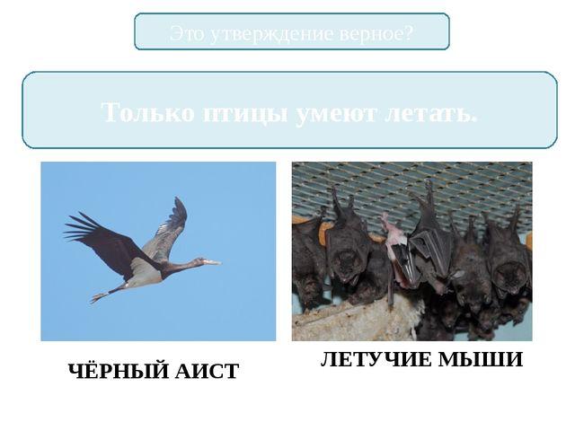 Это утверждение верное? Только птицы умеют летать. ЧЁРНЫЙ АИСТ ЛЕТУЧИЕ МЫШИ