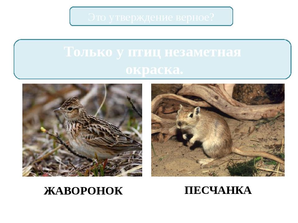 Это утверждение верное? Только у птиц незаметная окраска. ЖАВОРОНОК ПЕСЧАНКА