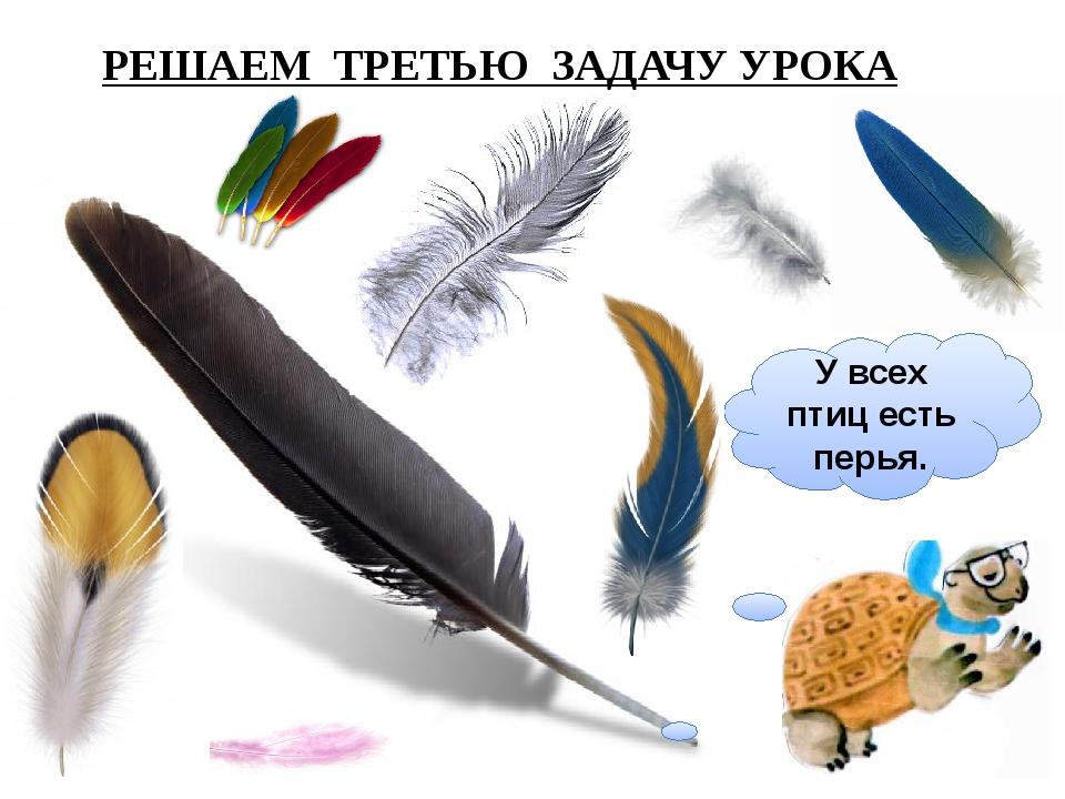 У всех птиц есть перья. РЕШАЕМ ТРЕТЬЮ ЗАДАЧУ УРОКА