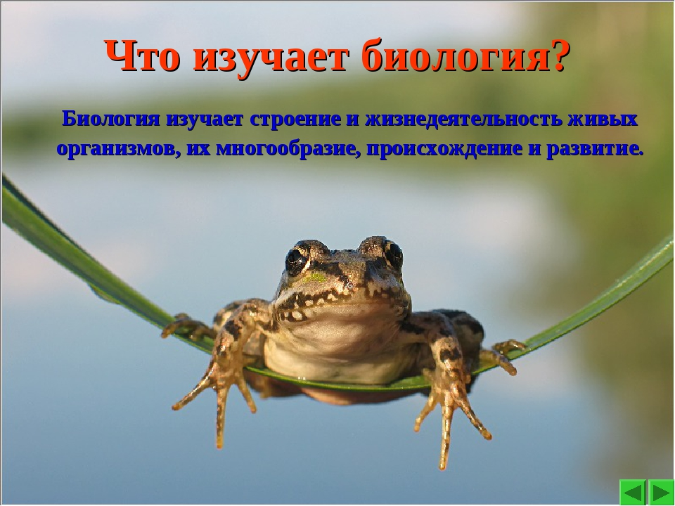 Что изучает биология? Биология изучает строение и жизнедеятельность живых орг...