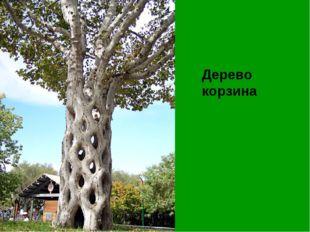 Дерево корзина