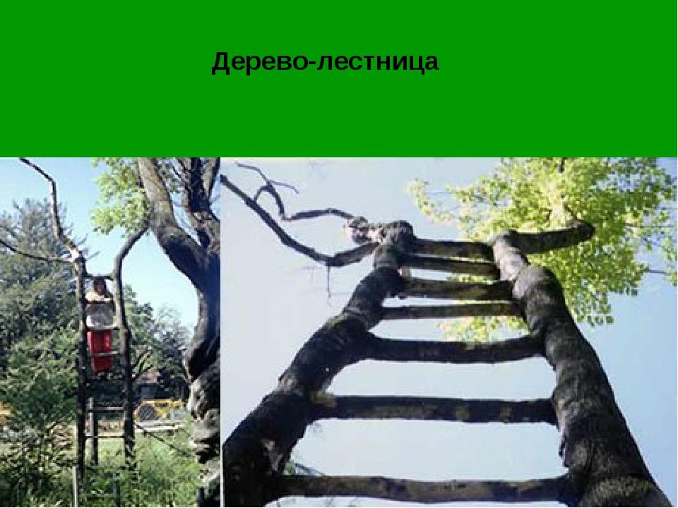 Дерево-лестница