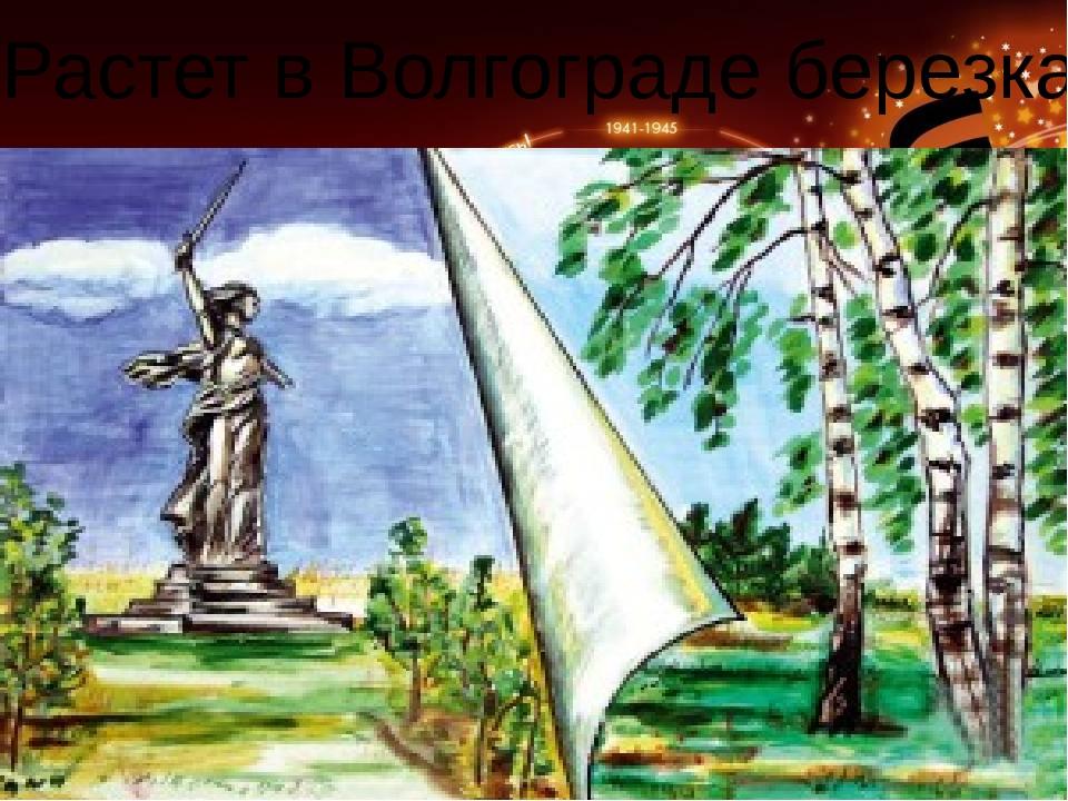 «Растет в Волгограде березка»